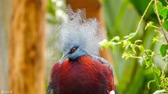 #Bird - 7838 (✵ΨᗩSᗰIᘉᗴ HᗴᘉS✵85 000 000 THXS) Tags: nature bird sony sonydscrx10m4 pairidaiza belgium europa aaa namuroise look photo friends be yasminehens interest eu fr party greatphotographers lanamuroise flickering challenge