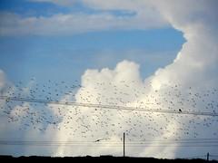 """The sound of birds stops the noise in my mind..."" (fl_mala) Tags: parosisland paros cyclades ilovegreece greece traveltogreece greecelovers discovergreece birds clouds beautifulsky"
