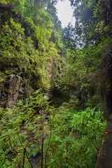 Gorge (PLawston) Tags: la palma canary islands spain los tilos laurisilva laurel forest gorge