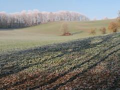 Lange Schatten (Waldrebe) Tags: winter frost freezing