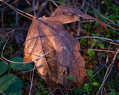 Winter's beacon on the forest floor. (Picture-Perfect Pixels) Tags: leaf twigs forest forestfloor winter beamoflight faded