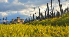 torrechiara (poludziber1) Tags: parma italy castle green grass landscape