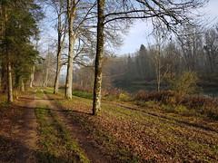 """Herbstspaziergang am Fluss Iller - Autumn walk on the river Iller - Marche d'automne sur la rivière Iller (warata) Tags: 2019 deutschland germany süddeutschland southerngermany schwaben swabia oberschwaben upperswabia schwäbischesoberland """"badenwürttemberg"""" badenwuerttemberg pflanze """"samsung galaxy note 8"""" nature outside landscape herbst autumn iller fluss river rivière"""