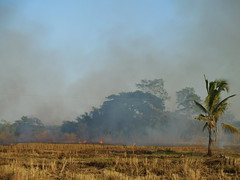 Burning Rice Paddies 3 (SierraSunrise) Tags: thailand isaan esarn phonphisai nongkhai smoke fire ricepaddy paddyrice pollution