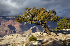 Grand Canyon sentinel (BDFri2012) Tags: grandcanyon grandcanyonnationalpark sentinel juniper tree clouds cloudy nationalpark arizona southwestunitedstates americansouthwest landscape