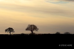 Barton upon Humber, North lincolnshire (SteveH1972) Tags: 5div canon5div canon5dmarkiv tree trees silhouette landscape uk britain england northlincolnshire lincolnshire barton bartonuponhumber outside outdoor outdoors winter 2019 europe