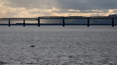 Abandoned dinghy floating in the Tay (milnefaefife) Tags: firthoftay 100xthe2019edition 100x2019 image67100 tayrailbridge abandoned dinghy boat tay dundee newportontay fife scotland sea coast water waves landscape sunrays sunlight clouds stratocumulus cumulus perthshire