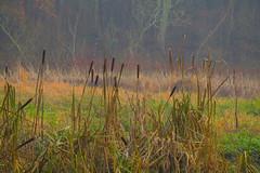 Misty Woodland Walks.. (Adam Swaine) Tags: mist misty woodland sussex flora counties countryside england english rural uk ukcounties beautiful naturelovers nature canon naturereserve county adamswaine 2019 walks grass naturesfinest