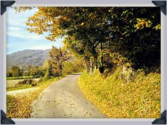 Country road 🍁🍂🍃 (color raimbow) Tags: countryside countryroad vividcolors contrastingcolors goldenleaves trees bluesky clouds hills landscape autumn autumnview italy