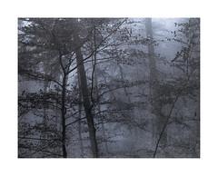Vandyke Blue (Wolfgang Moersch) Tags: fp4 tanol tonedvandyke mt7ironbluetoner