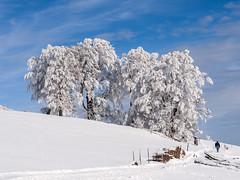 Frozen - Schnee im Schwarzwald (eloaxe) Tags: baden berg deutschland ereignisse natur rodeln schauinsland schnee sportfreizeit wetterjahreszeit winter eis outside nature snow tree baum frozen