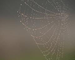 Winter Web.. (Adam Swaine) Tags: spidersweb naturelovers nature naturereserve beautiful sunlight canon england english britain counties countryside uk ukcounties adamswaine macro insects sussex