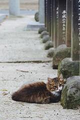 stone pillow (Sat Sue) Tags: olympus micro four thirds stray cat shrine japan fukuoka m43 penf