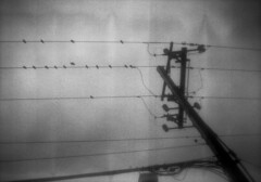 untitled (kaumpphoto) Tags: b2cadet boxcamera 120 ilford 3200 bw black white bird wire sky composition street power electric electricity perch