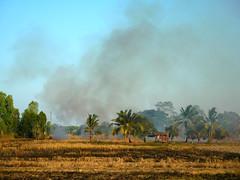 Burning Rice Paddies 1 (SierraSunrise) Tags: thailand isaan esarn phonphisai nongkhai smoke fire ricepaddy paddyrice pollution