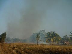 Burning Rice Paddies 2 (SierraSunrise) Tags: thailand isaan esarn phonphisai nongkhai smoke fire ricepaddy paddyrice pollution