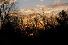 Late Autumn - Hidden Sunset (Modkuse) Tags: sooc straightoutofcamera nopostprocessing velvia fujifilmvelviasimulation fujifilmxh1velviasimulation xh1 fujifilmxh1 macrolens 80mm xf80mmf28rlmoiswrmacro xf80mmf28rlmoiswrmacrolens fujinonxf80mmf28rlmoiswrmacro nature natural natureart art artphotography artistic artisticphotography photoart fineartphotography fineart outdoors sunset vividcolor vibrantcolor vivid