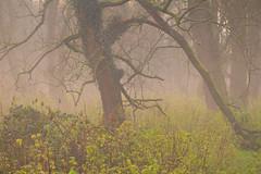 Woodland Mist Sussex (Adam Swaine) Tags: woodland mist naturelovers nature trees counties countryside naturereserve england english britain british uk ukcounties adamswaine beautiful canon flora greatbritain lichen