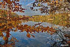 Herbst (garzer06) Tags: herbst wasser wolken himmel mecklenburgvorpommern inselrügen naturephotography vorpommernrügen naturfotografie baum landscapephotography landschaftsfotografie landschaftsbild landschaftsfoto