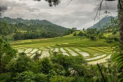 Myanmar 2019 (Massimiliano Dalcielo) Tags: myanmar birmania nikon nikonflickraward massimiliano dalcielo fromsky sigma travel trip viaggio vacanza journey asia globetrotter d7500 burma paddies risaia trekking mud muddy landscape panorama pano paesaggio