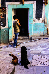 Back street, Guanajuato Mexico (klauslang99) Tags: klauslang back street streetphotography guanajuato mexico dogs