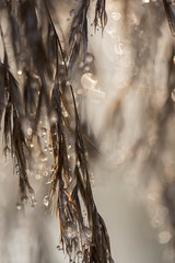 Un petit bonheur -* (Titole) Tags: abstract natural droplets titole nicolefaton bokeh monotone thechallengefactory