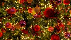 ENJOY AND REMEMBER IN DECEMBER (pwitterholt) Tags: december enjoy friends family familie kerst kerstverlichting kerstsfeer kersttijd kerstgevoel kerstboom roos rose christmas christmastree canon canonsx40 canonpowershotsx40hs canonpowershot light gezellig genieten