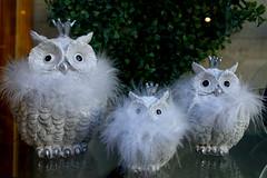 Eulen in Riva del Garda entdeckt (ingrid eulenfan) Tags: rivadelgarda trentinosüdtirol italien eule owl dekoration deco schaufenster krone smileonsaturday fluffy