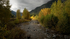 In the half light of the canyon (loewx017) Tags: mountain aspens trees aspen tetons west western americanwest life nature flickr light dark mood moody sunrise sunset dusk dawn plants color saturation picture photo photography glacier nationalpark fog mist steam