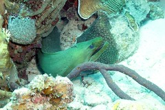 1912023433w (gparet) Tags: ocean sea fish water coral underwater scuba diving scubadiving reef undersea sport swim photography outdoor dive buddy resort caribbean diver bonaire buddydive buddydiveresort marshscuba marshscubasupply