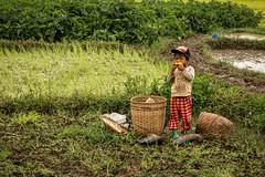 Myanmar 2019 (Massimiliano Dalcielo) Tags: myanmar birmania nikon nikonflickraward massimiliano dalcielo fromsky sigma travel trip viaggio vacanza journey asia globetrotter d7500 burma risaia boy child ragazzo paddies trekking mud muddy ritratto portrait