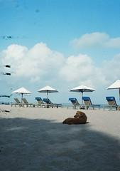 Bali beach dog (funky_sexy_groovy_marky) Tags: bali halfframe analogue
