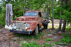 Haulin Ford_190107 (rjmonner) Tags: agriculture agricultural agronomy agronomic antique aged antiquity abandoned country dilapidated dormant decayed deserted exposed logging history happytruckthursday isolated ford forgotten forest washington washingtonstate northwest junker nikon metal neglected natural outdoors old oxidized parked quaint antiques rural relic rustic rusted rust restore truck truckthursday tires trees textured usa unpainted used vintage vanishing vehicle workhorse yesteryear yore bygonedays