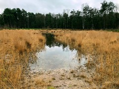 at last there is more water in the ven (Sylvia Okkerse) Tags: ven shallowlake sandysoil reeds trees water reflections