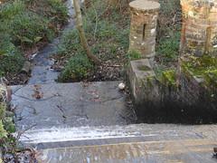 DSCN1837 (stamford0001) Tags: buchan park crawley west sussex