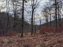 Woods (oldsnake977) Tags: wood nature tree colors atmosphere pixel