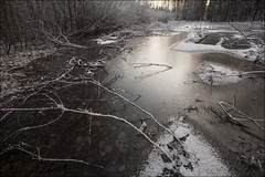 20191130. Ice on the water. 1527-1 (Tiina Gill (busy)) Tags: estonia outdoor winter snow pond ice sipa forest