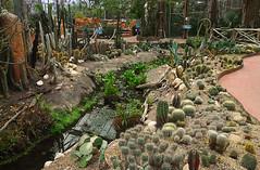 090406 stcP 1912122 © Théthi (thethi: pls read my first comment, tks) Tags: paradisio1 parc serre tropical oasis decouverte plante eau sécheresse cactus paradisio brugelette hainaut wallonie belgique belgium