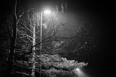DSCF1889 (frederikboving) Tags: tree silhouette night evening mist wet lamppost light single isolated reflections
