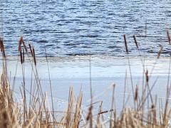 Forming Ice (Steve InMichigan) Tags: lake frozenlake ice water canoneosm50 soligor135mmf35tokinalens fotasyt2eosmlensadapter