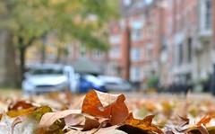 London Leaves.... (markwilkins64) Tags: london leaves bokeh markwilkins dof depthoffield cars buildings architecture tree lowpov windows railings autumn