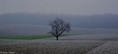 Dezembermorgen im Kraichgau (Dieter Höhnel) Tags: kalt nebel morgen landschaft natur stille felder