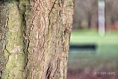 Baysgarth Park, Barton upon Humber (SteveH1972) Tags: baysgarthpark baysgarthmuseum baysgarthhouse bartonuponhumber humber barton town canon5dmarkiv 5div uk britain england winter 2019 outdoor outdoors outside tree bark