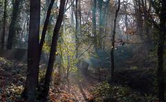 The sun, my best friend (roland_tempels) Tags: belgium steendorp nature naturereserve trees sun sunlight supershot autumn fortress