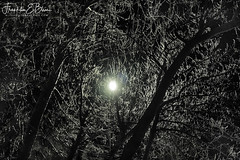 Reflections: Ice Covered Night (franklin331) Tags: backlit blissranch blissdinosaurranch blissphotographics borderlands brach branches frankbliss franklinbliss franklinebliss homestead ice montana storm wyoming