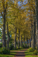 Tree line (fotosforfun2) Tags: tree autumn seasons yellow colour arundel sussex england uk britain