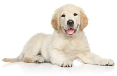 At Safe Journey Dog Boarding It's a welcoming and exciting place for all dogs. Providing an interactive environment that keeps your dog engaged and entertained all day! Visit our site or give us a call today! https://t.co/9cDXkHg16Z (503) 209-0177 https:/ (Safe Journey Dog Boarding) Tags: dog boarding aloha happy valley cage free west linn gresham doggie day care portland beaverton