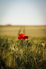 Ils reviendront... (pascal445) Tags: floral flowers fleurs été summer natureoutdoorlandscapes naturepics