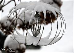 We Had A Little Snow Last Night... (angelakanner) Tags: canon70d tamron18400 snow garden longisland