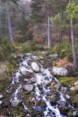 Torrente (JoseQ.) Tags: torrente chorrera arroyo agua bosque arboles piedras vinuesa lagunanegra soria invierno